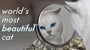 The Most Beautiful Cat Looks In the Mirror With A Pile Of Money Behind It