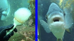 Cleaning brush underwater and a fish.