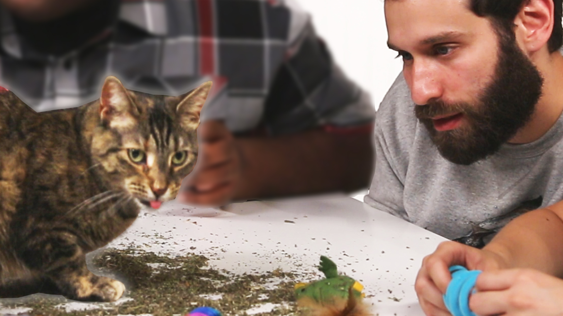 Buzzfeed Video Stoned People Play With Cats On Catnip